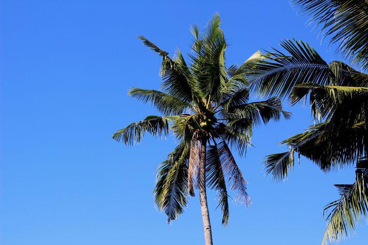 Фотографии для вашей страницы, статьи, блога с острова Себу, Филиппины - 1108684