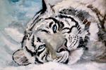 Тигр, масло