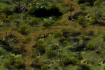 Локация - болота