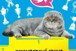 Баннер кота Арнольда)