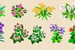 Цветы, Цветочная Усадьба