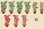 Стадии роста, Цветочная Усадьба