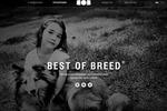 Сайт «под ключ» bestofbreed.ru