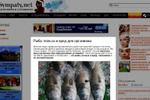 Рыба: польза и вред для организма