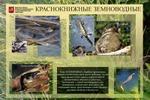 Строгино-парк. информационный щит