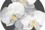 """Иллюстрация """"Орхидеи"""" Для стеновых панелей ПВХ"""
