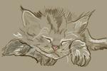 Спящий котенок
