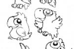 папугайчики