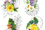 Иллюстрации на этикетку натуральной коcметики SIBERINA