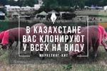 Маркетинг-кит. Упаковка франшизы под ключ в Казахстане