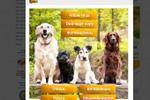 Оформление группы владельцев домашних животных. Меню+верстка+уст