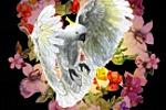 Персонаж сайта цветов КАКАДУ