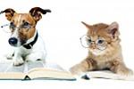 """Статья в раздел """"Офтальмология"""" сайта ветеринарной клиники"""