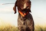 Навигатор для собак – стильный помощник современного охотника