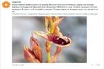 """Пост_Орхидея_для компании """"7 цветов"""""""
