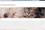 SEO текст: Услуги домашним животным