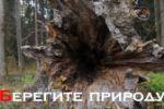 Социальный ролик о вырубке лесов