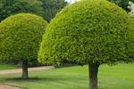 Служба по уходу и удалению деревьев