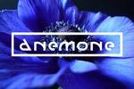 "Разработка логотипа для магазина дорогих тканей ""ANEMONE"""