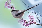 Пасхальные птички_2