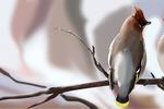 Пасхальные птички_4