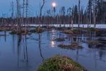 Восход луны на болоте