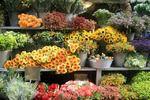 Цветочный бизнес в Казахстане