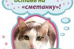 Плакат для Дня открытых дверей приюта для бездомных животных.
