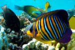 Рыбы Таиланда