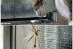 Москитные сетки – отличная защита от комаров и мошек