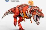 Мальчик на динозавре. Банер для немецкого Дино-парка.