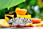 Бабочка на фруктах