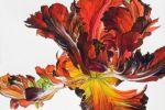 Британское Сообщество Ботанических Художников