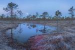 Закат луны на болоте