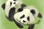 панды зарисовка