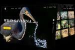 Animals Savanna