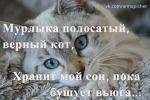 Мурлыка полосатый, верный кот