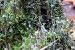Мир мохообразных
