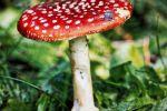 Игра. Описание монстров для игровой энциклопедии