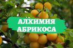 "Фильм ""Алхимия абрикоса"""