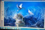 8 марта - Лети голубка