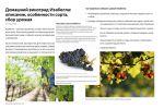 Домашний виноград Изабелла: описание, особенности сорта