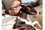 Товары для собак: пост