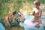 купание с тигром