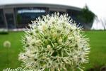 цветок на фоне Донбасс-Арены