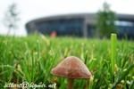 гриб после дождя