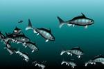 Стайка рыбок
