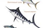 рыбы для упаковки морепродуктов
