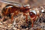 Мужчины-насекомые:классификация