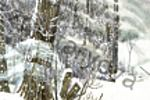 """иллюстрация на открытку """"зимний лес"""""""